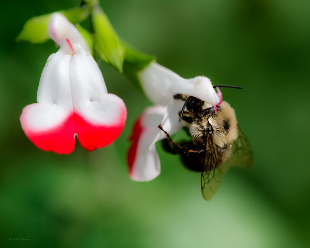 Surprise Guest a Bee.jpg