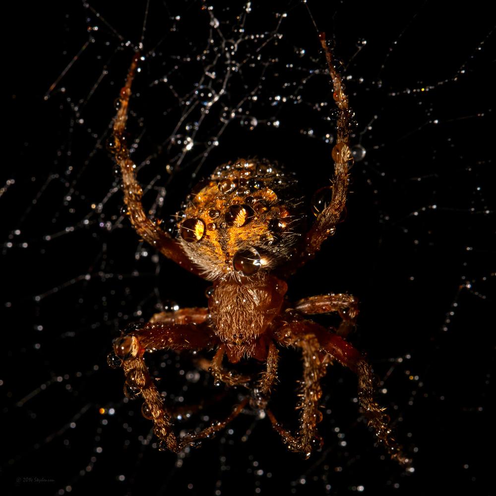 New Porch Spider