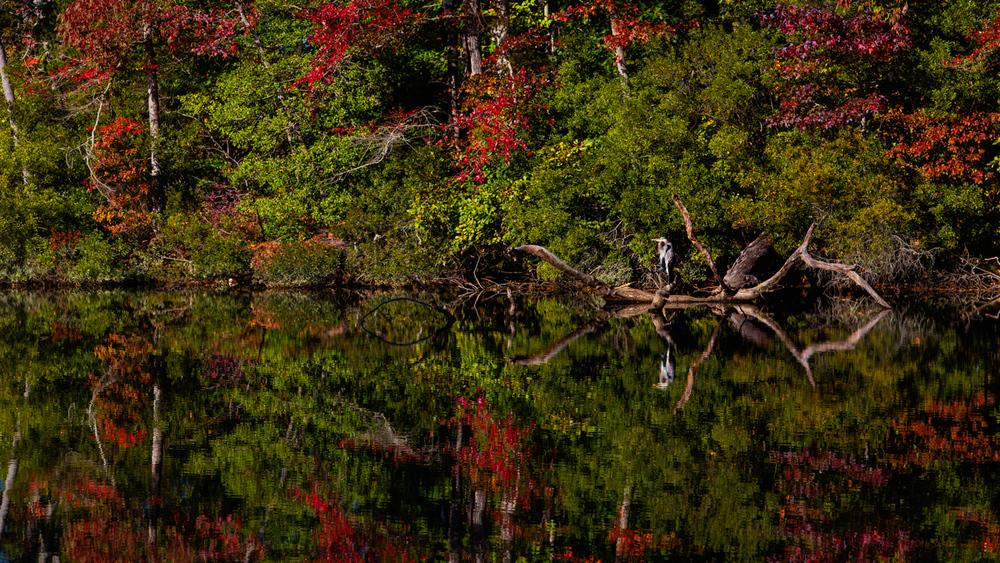 Reflections at Lake Maury