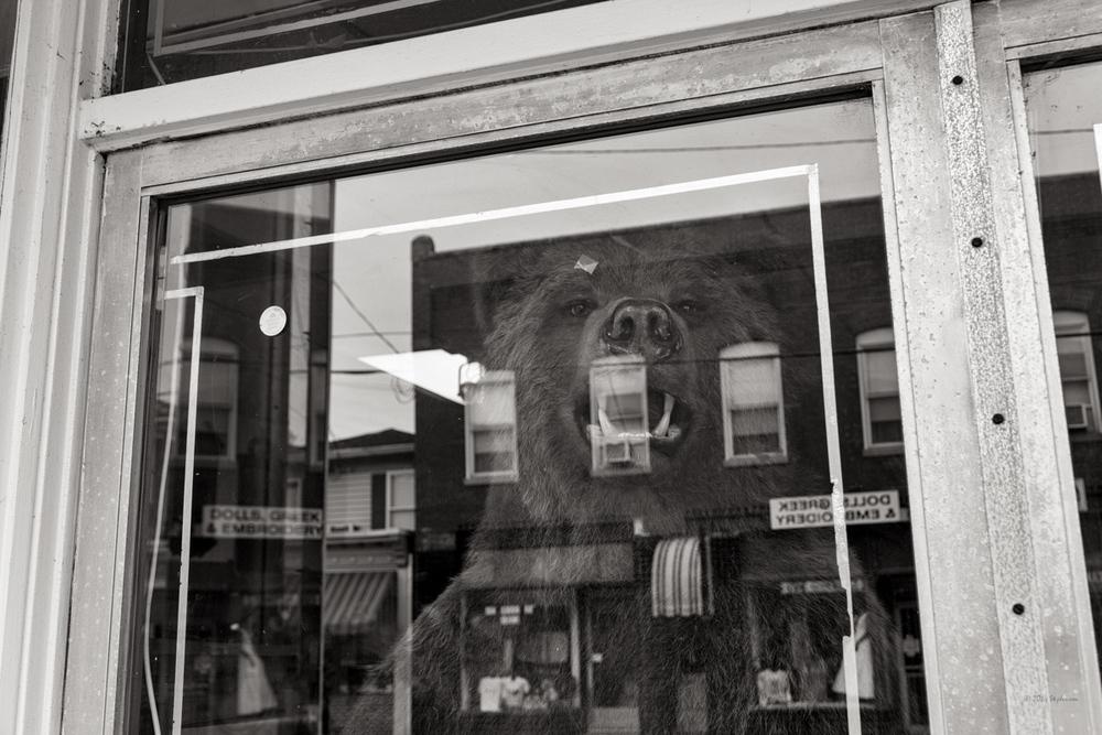 Bear in Window