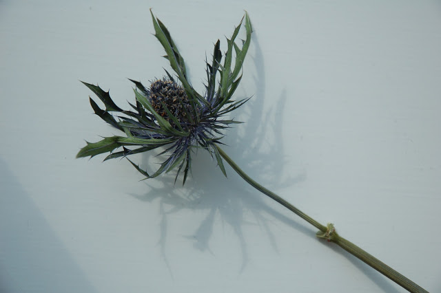 Dried out thistle.