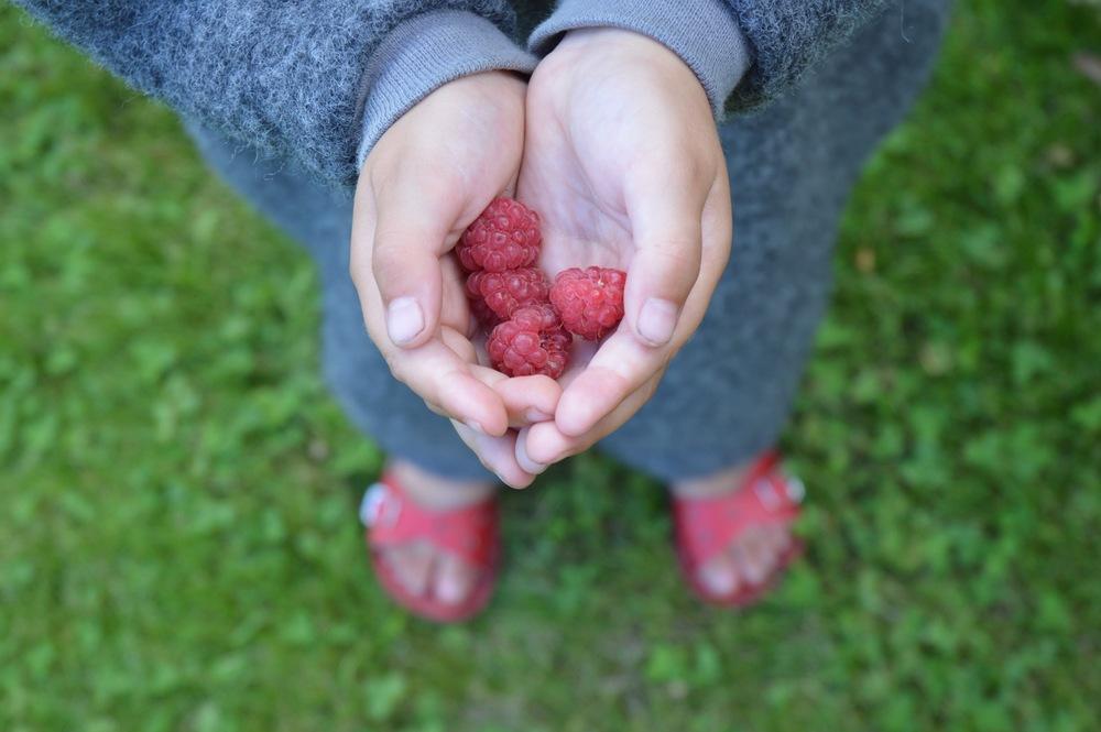 Berries_03