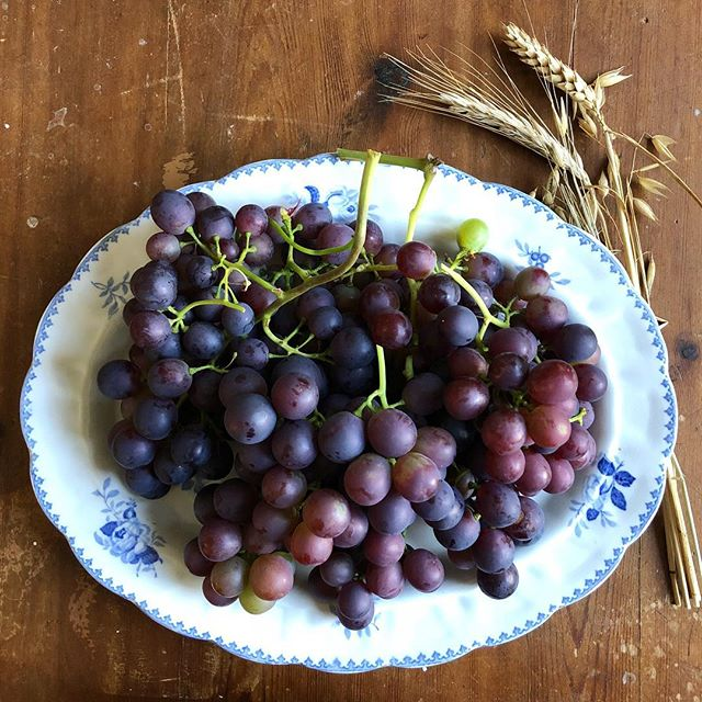 Grapes - but not just any grapes: grapes from our own greenhouse ✨🍇✨ #countrysidelife #september #wildgarden