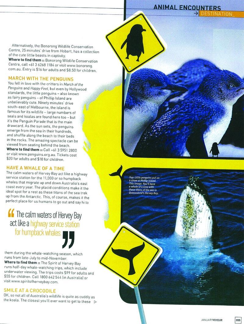 Voyeur Magazine Phillip Island Nature Parks Feature.jpg