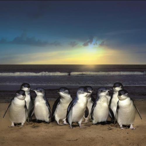 Penguins on beach.jpg