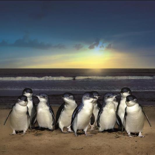 Penguins on beach.jpg