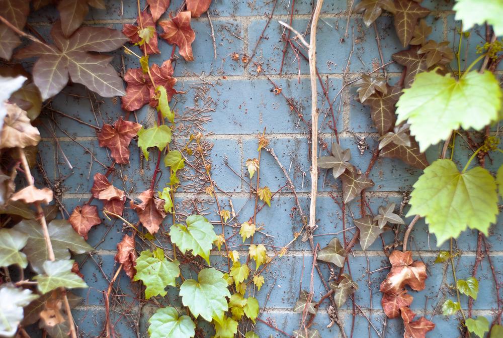Blue Wall Vines