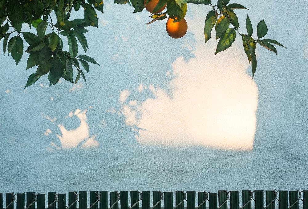 Driveway Orange Tree