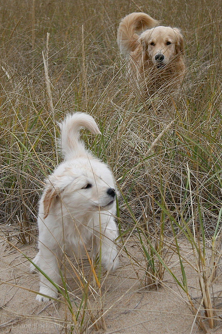 Wilson (behind) and Molly on a Photo Expedition.  When I started this site, Wilson was still alive and Molly was a little younger.  My beautiful dogs.