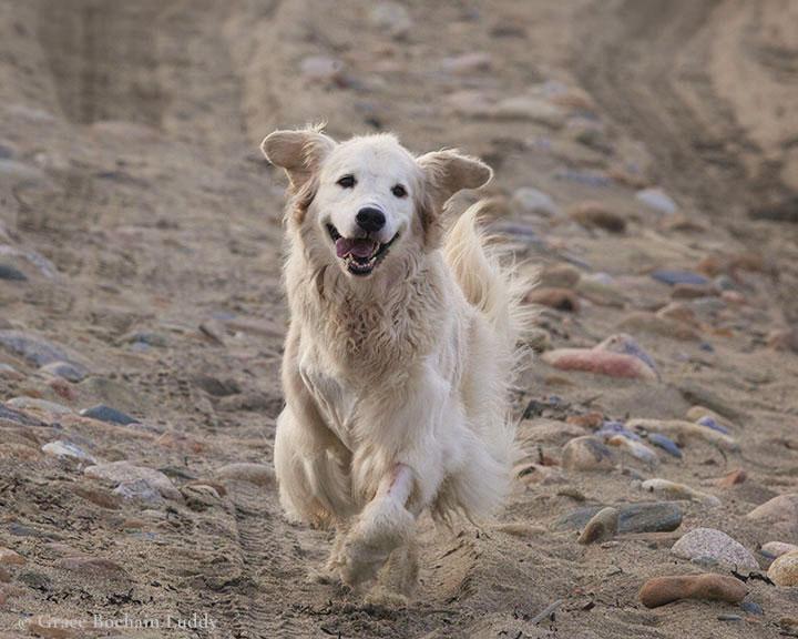 Molly Really Running