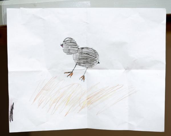 Chicks-001.jpg