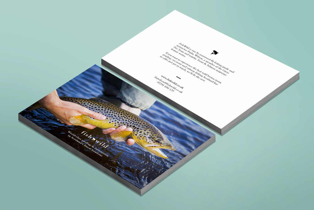 Fish wild - Branding + Website