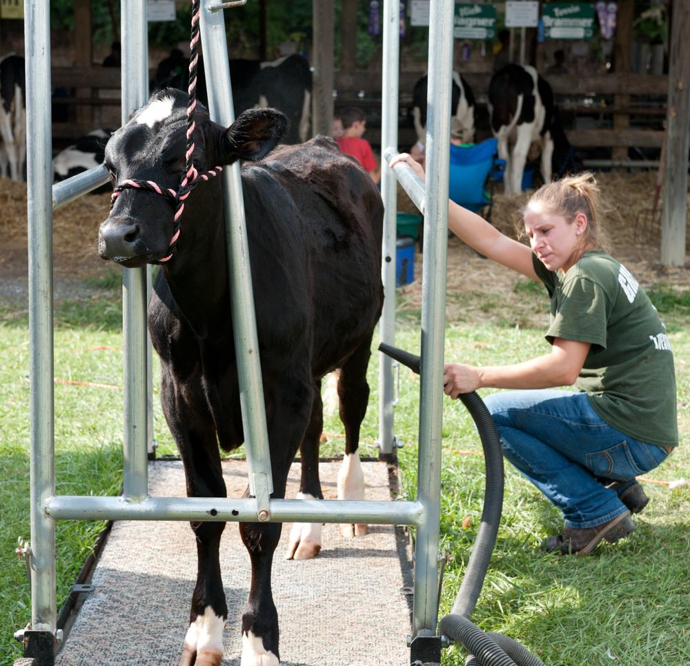 2012 Livestock Photos