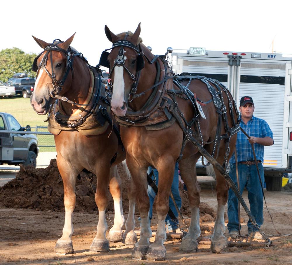 2012 Horse Pull Photos