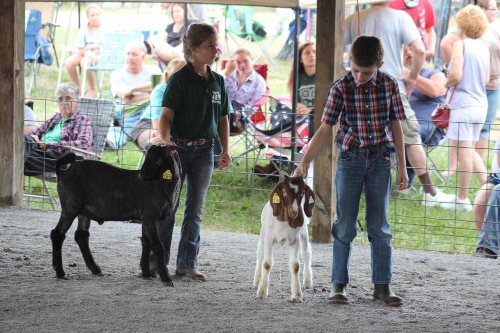 2014 Livestock Photos