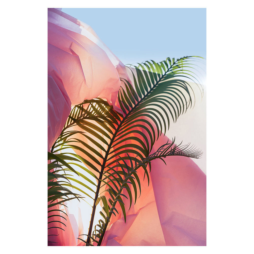 "Palm on Plastic: La Habra, California  Lightjet Kodak Endura C-Print, 30.0"" x 20.0""  Signed, 2017  Edition of Five + 1 Artist Proof"