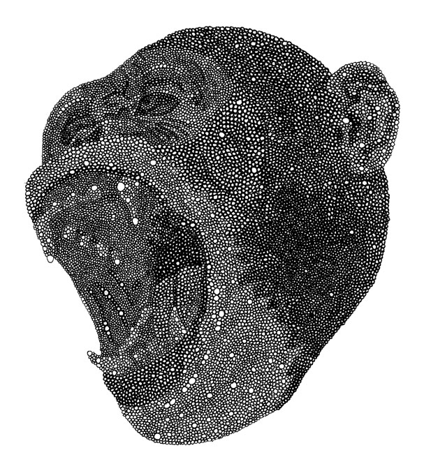 "Chimp / pen on paper / 6.5"" x 10"" / 2011"