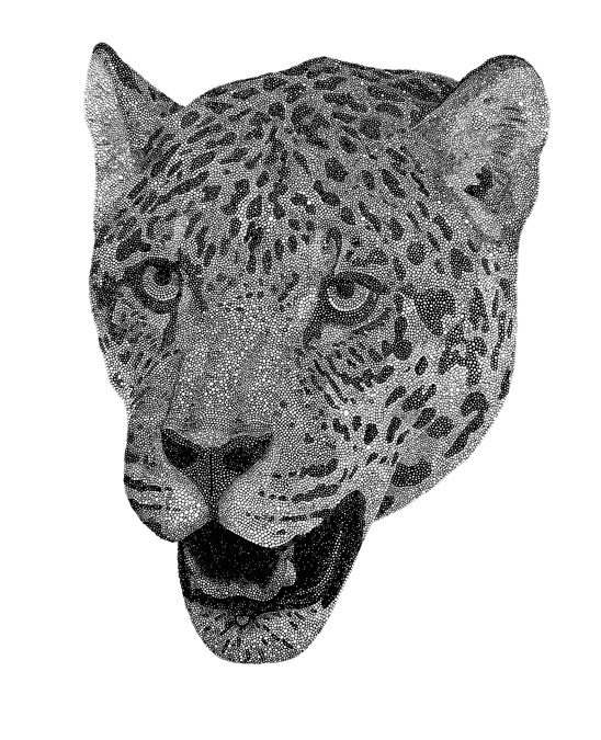 "Jaguar / pen on paper / 14"" x 17"" / 2011"