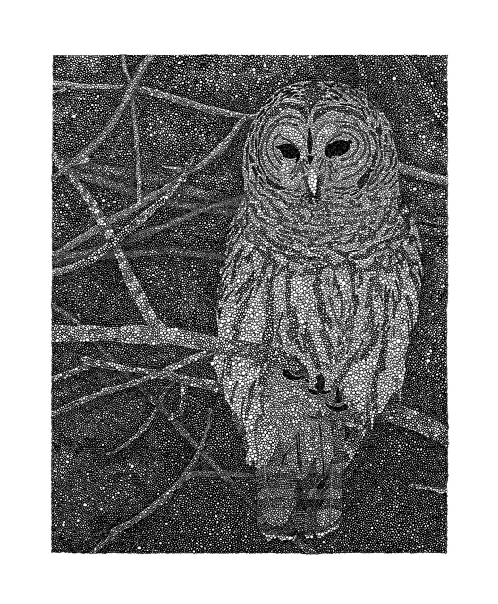 "Owl / pen on paper / 14"" x 17"" / 2012"