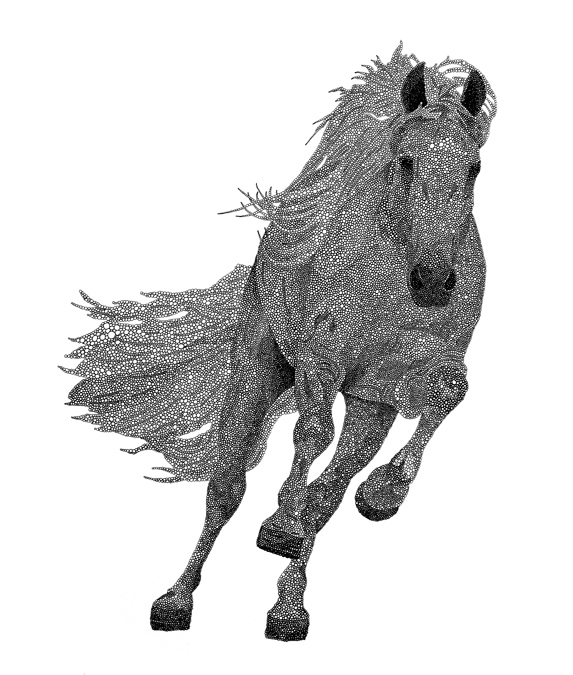 "Stallion / pen on paper / 14"" x 17"" / 2011"