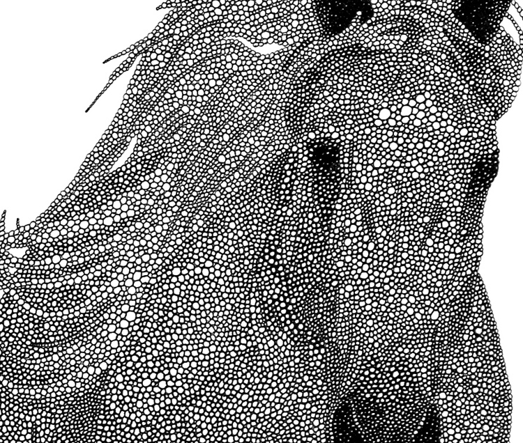 "Stallion (detail) / pen on paper / 14"" x 17"" / 2011"