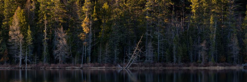 Hartwick Pines State Park #5