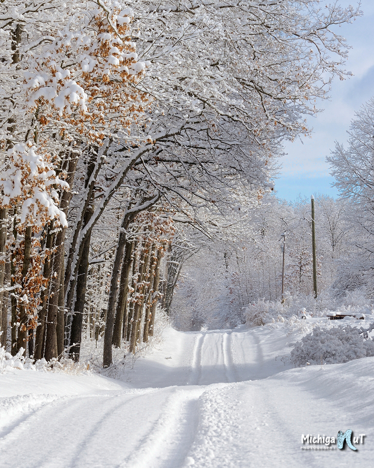 snowy winter trees along a Michigan back road.jpg