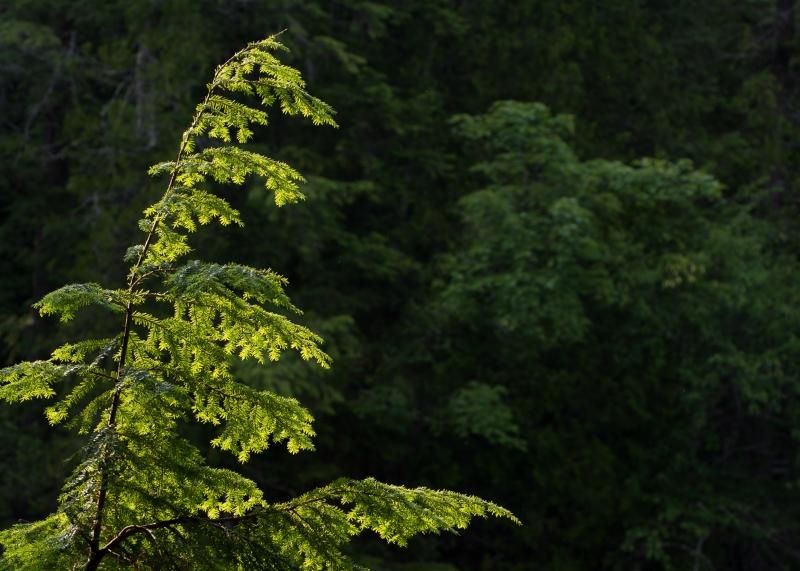 Tahquamenon Falls State Park #3