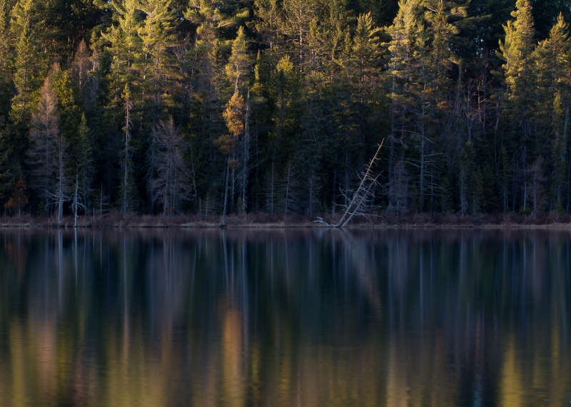 Hartwick Pines State Park #3