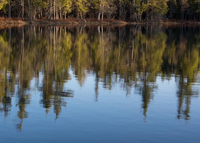 Hartwick Pines State Park #4