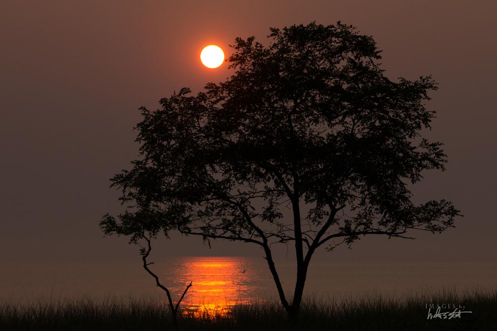 sun tree 6978.jpg