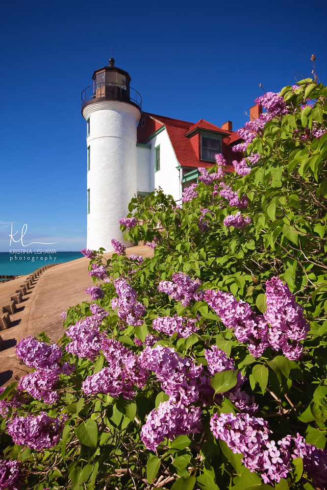 Lilacs at Point Betsie.jpg