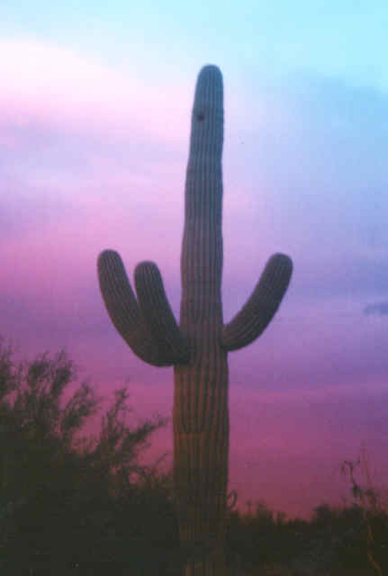 sunset-colored-cactus1.jpg