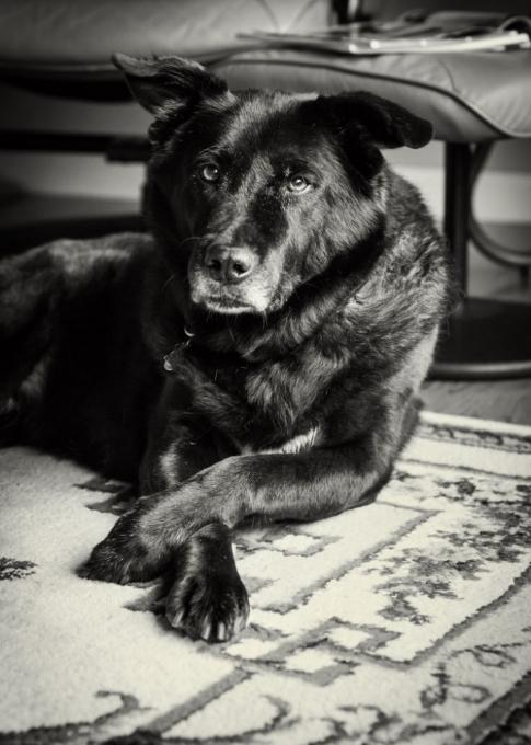 Annie, my Oma's gentleelderly companion.