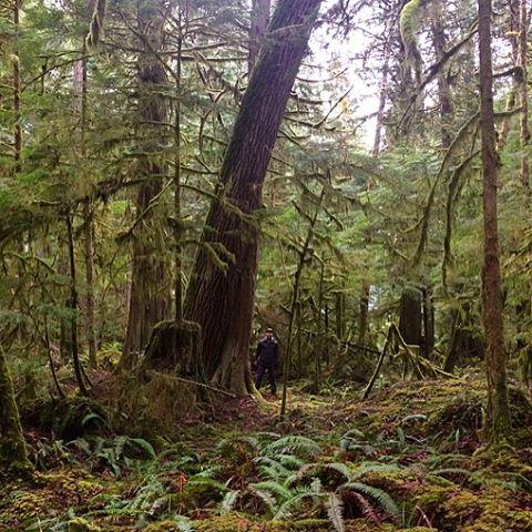 shinrin-yoku in a magical moss forest 💚