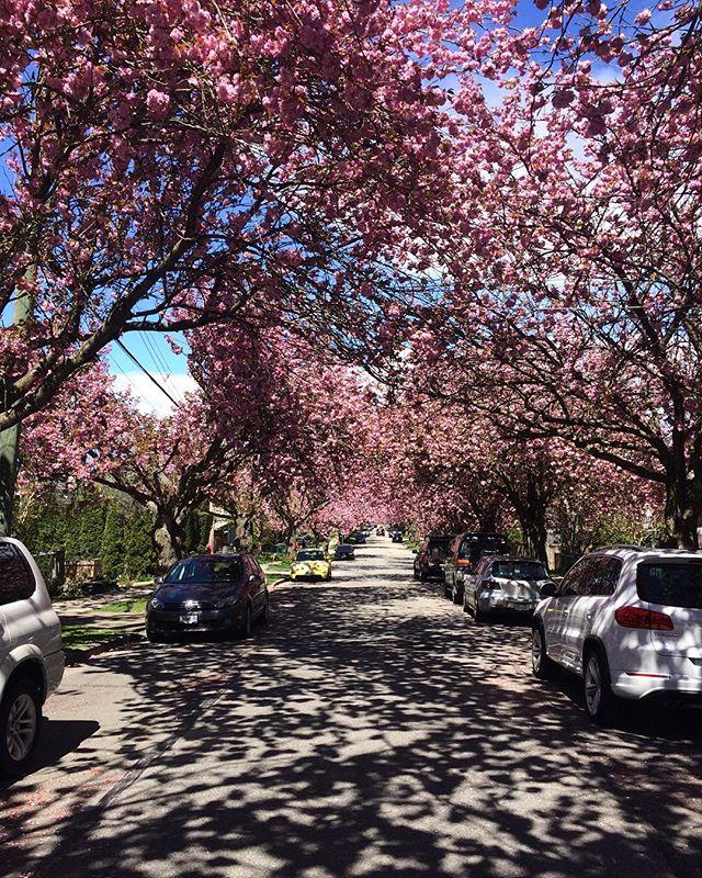 sundaze biking on dream streets 🌸💕🦄🌸