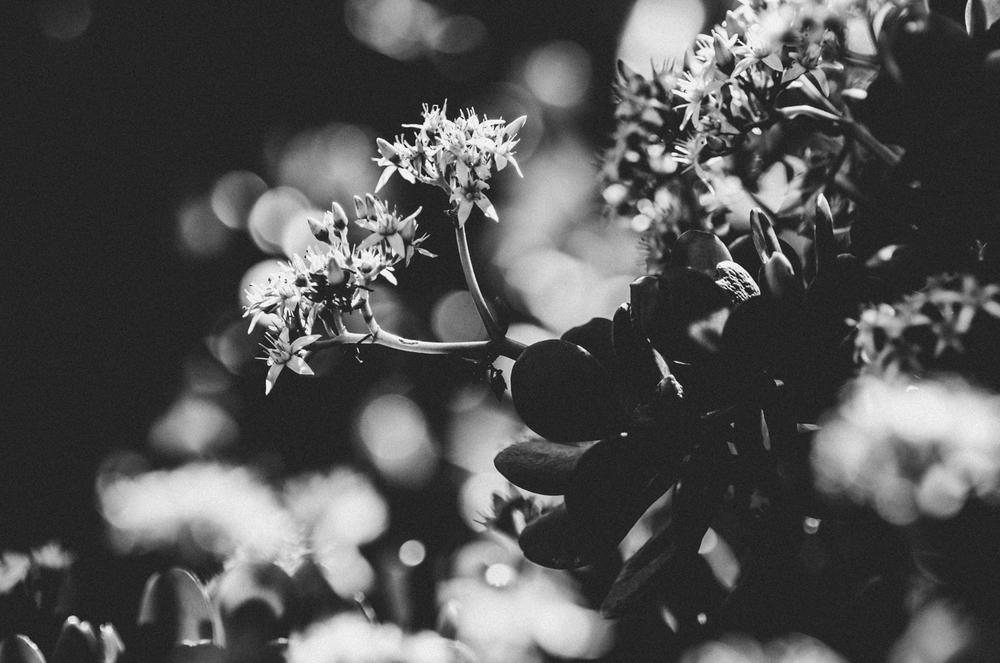 Kara_CactusEdit_20.jpg