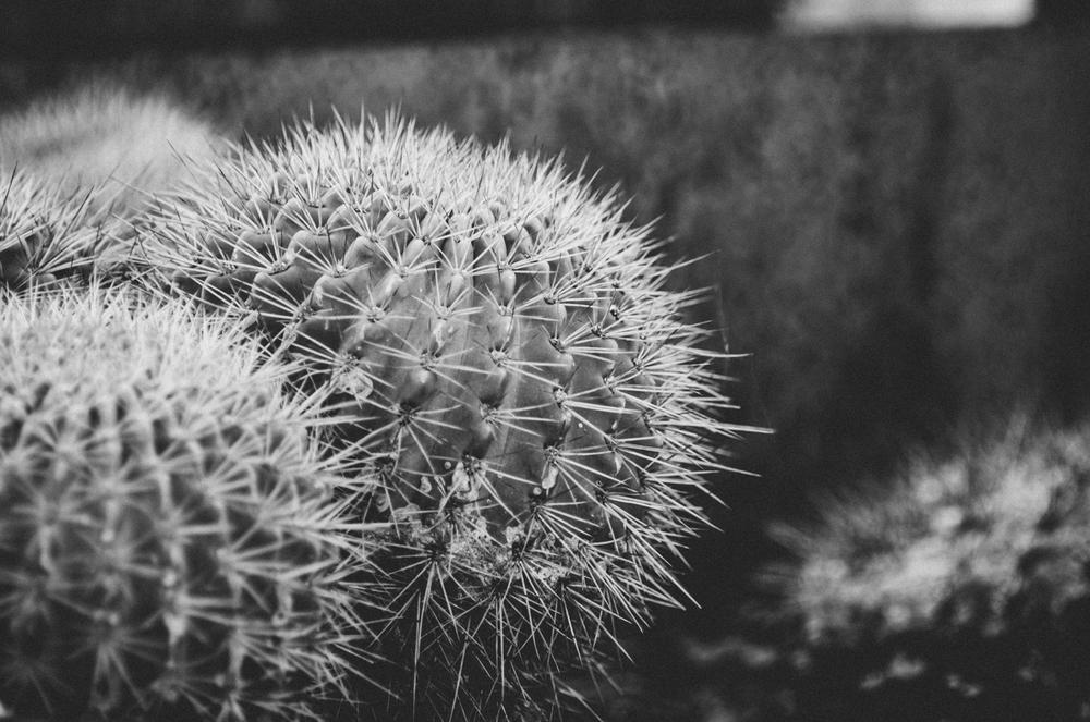 Kara_CactusEdit_32.jpg