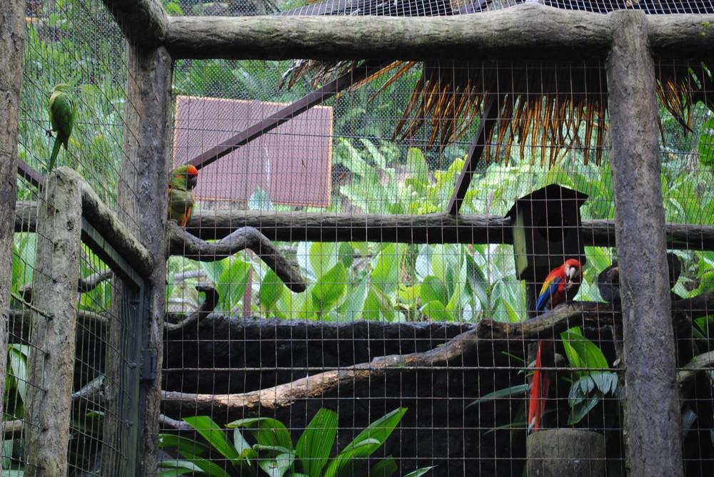Costa Rica 2014 026.JPG