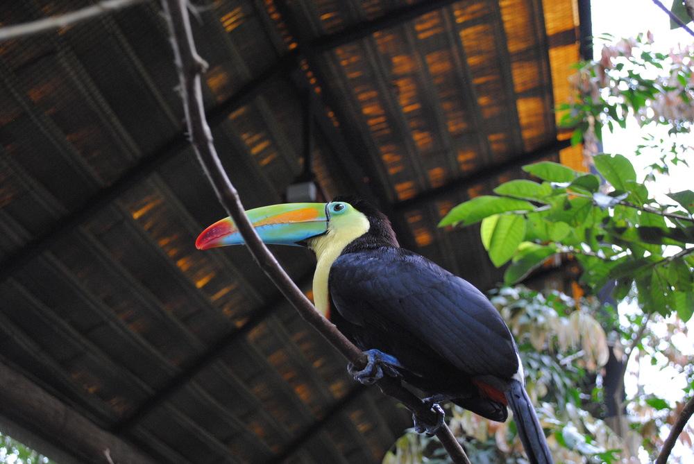 Costa Rica 2014 038.JPG