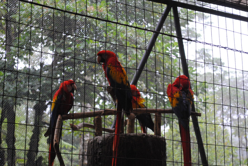 Costa Rica 2014 045.JPG