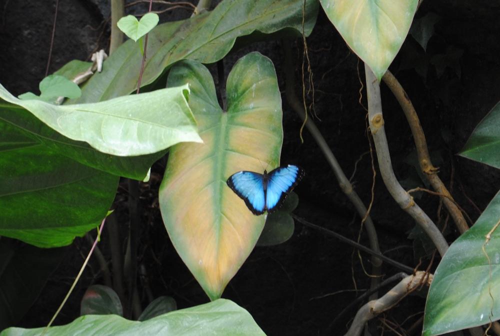 Costa Rica 2014 057.JPG