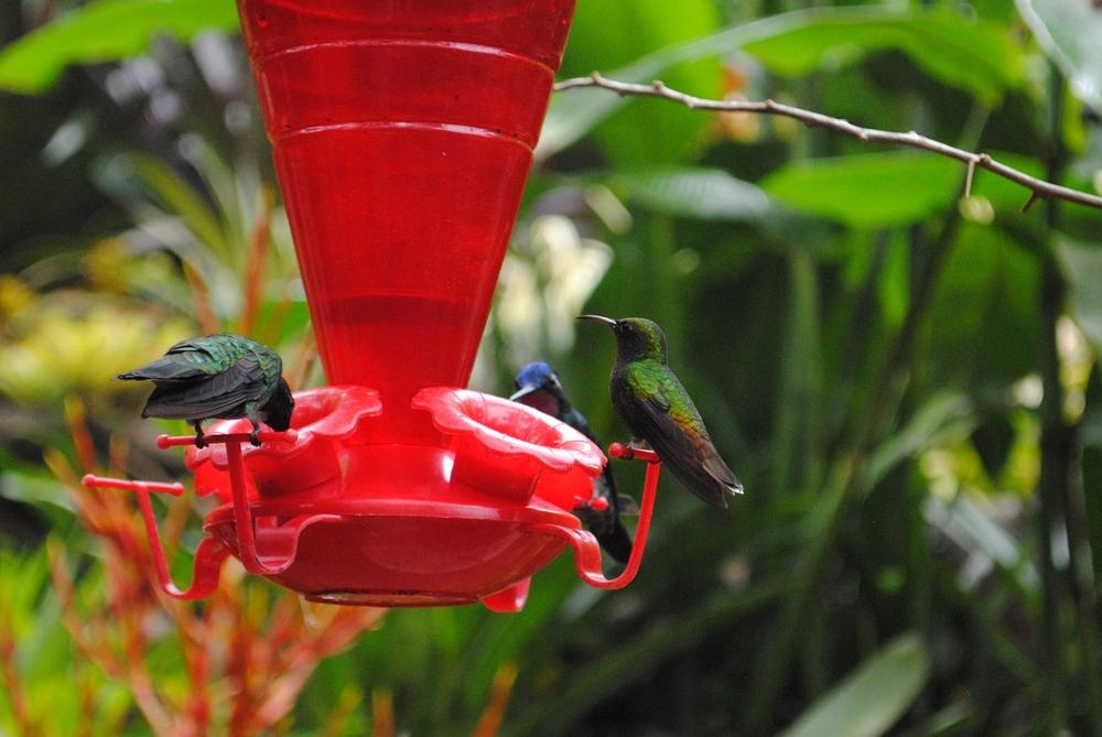 Costa Rica 2014 074.JPG
