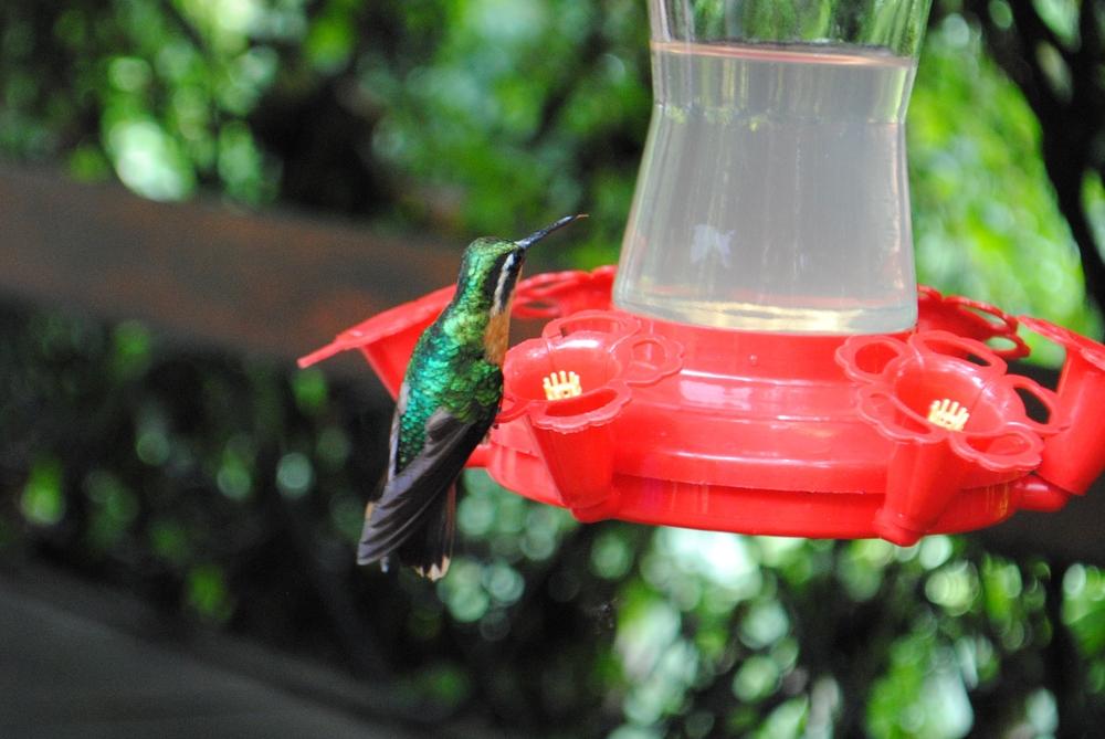 Costa Rica 2014 077.JPG