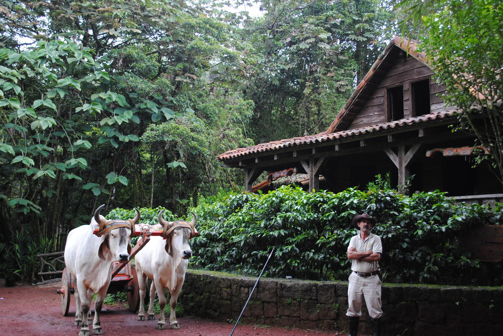 Costa Rica 2014 100.JPG