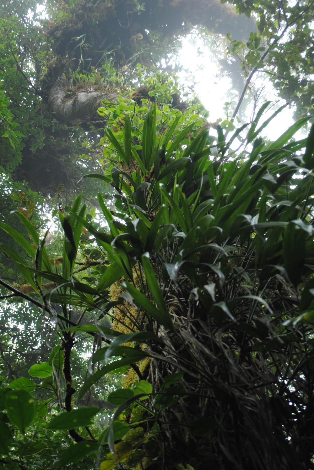 Costa Rica 2014 491.JPG