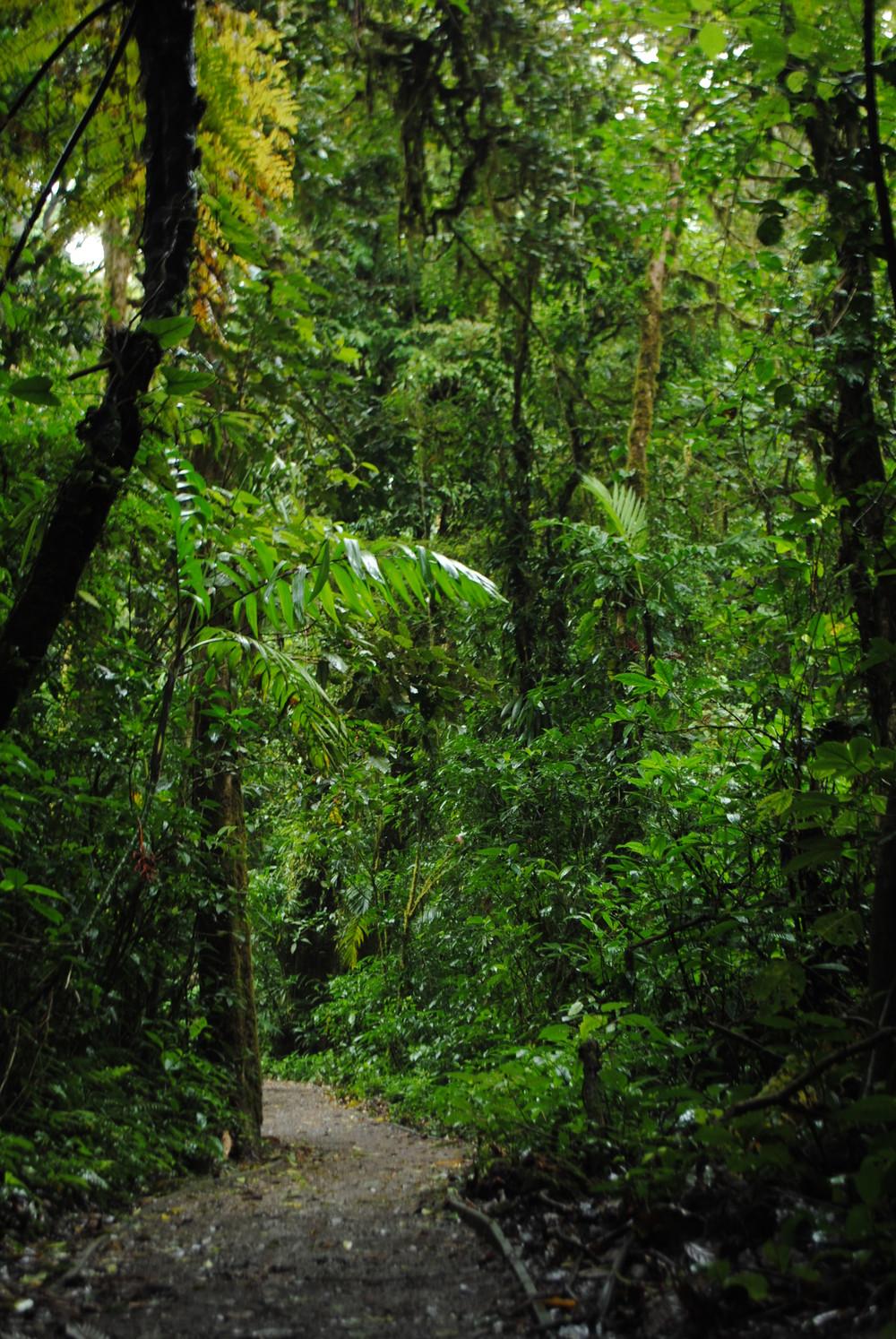 Costa Rica 2014 512.JPG