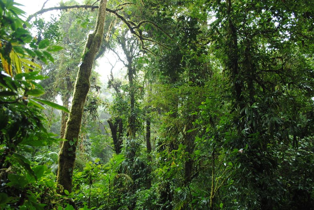 Costa Rica 2014 516.JPG