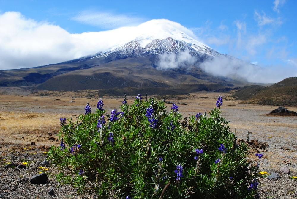 September - Home-Ecuador 734.JPG