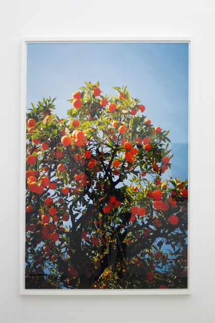 Appelsiner,2011, 163 x 113 cm. Inkjet print in custom frame. Edition of 2 + 1 ap.
